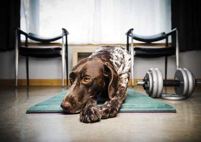 Vet Check - Working Dog Magazine